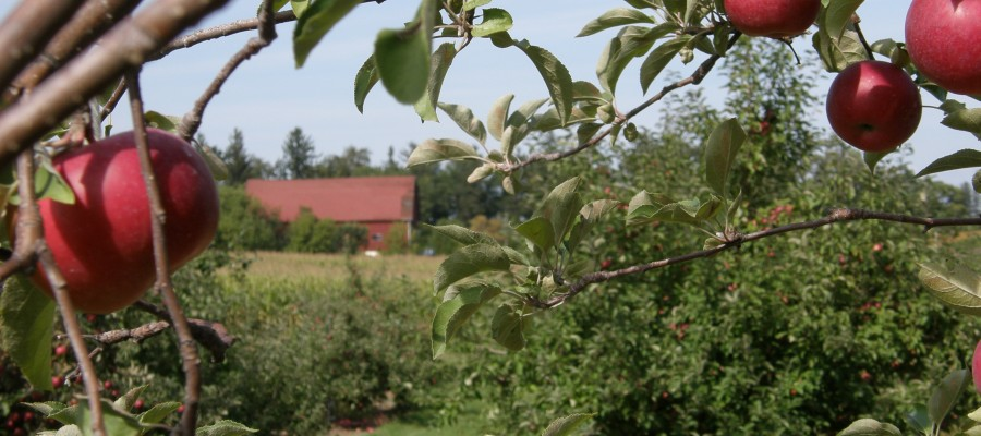 Lapacek's Apple Orchard