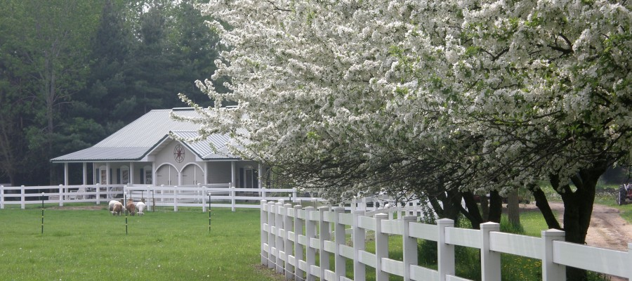 Flowering Crab Apple Trees at The Inn