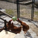 Speckled Hens Cabbage Pinata Party